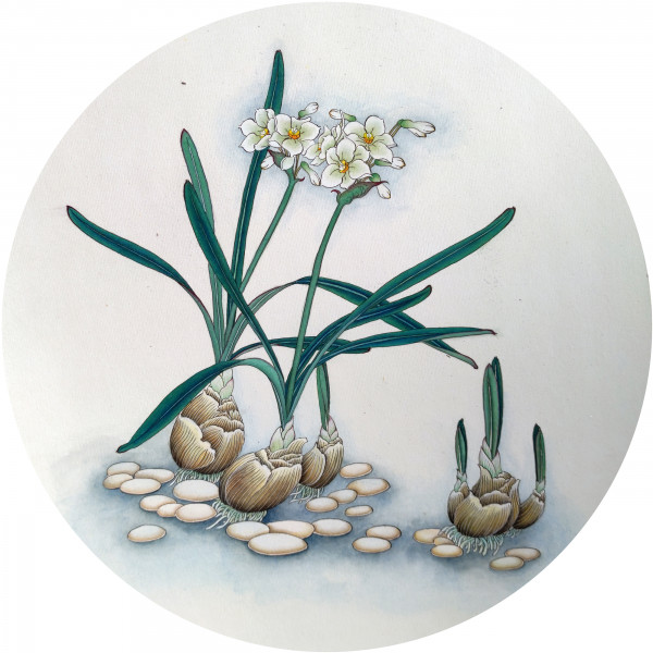 НАРЦИССЫ НА КАМУШКАХ. NARCISSUS ON PEBBLES